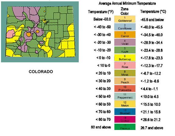 Planting Info Colorado Tree Specialists